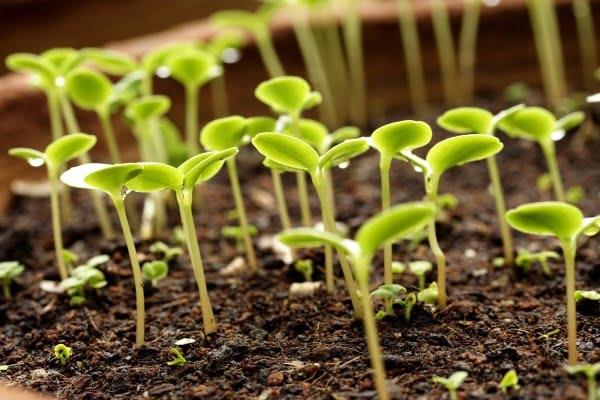 iboga-ceremony-retreat-healing-plant-growth