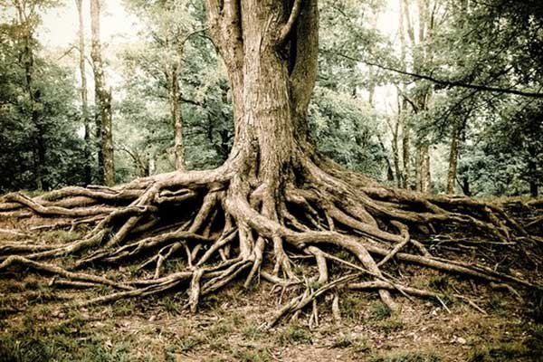 iboga-canada-medicine-ayahuasca-forest-intelligence