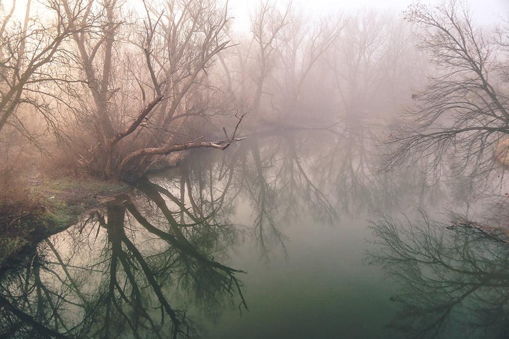 iboga-journey-silent-meditation